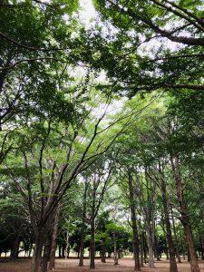 【賃貸】代々木公園の近くでワンルーム、1K、1DK、1LDKの賃貸マンションに住みたい!