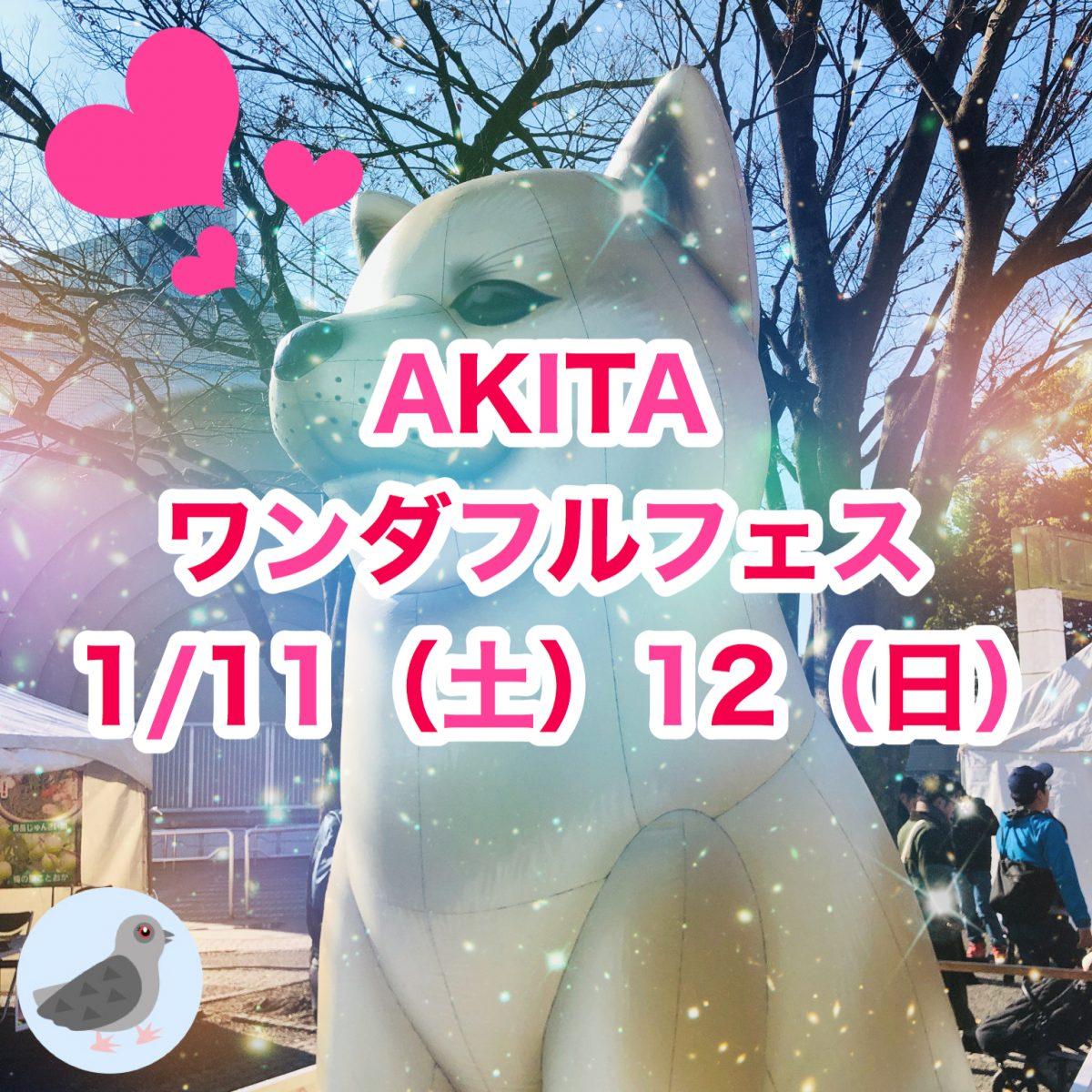秋田の食・芸能でワイワイ 秋田犬と一緒にモフモフ 「なまはげ」も来るヨ!AKITAワンダフルフェス2020